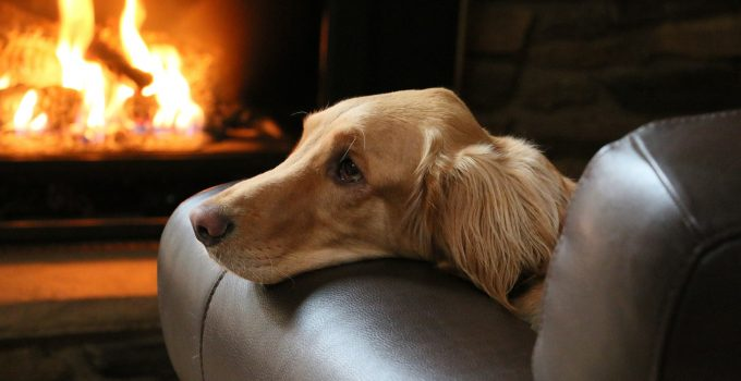 Tips to Keep Your Pet Safe This Winter