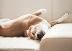 5 Signs Your Pet Has Asthma   Crown Veterinary Specialists