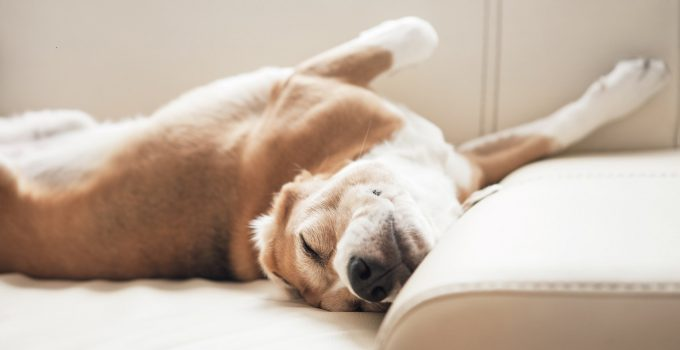5 Signs Your Pet Has Asthma