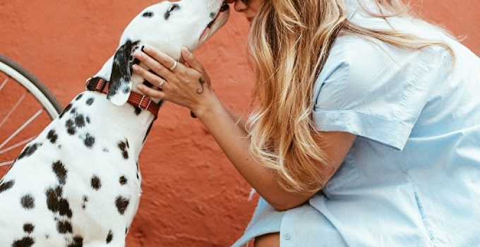The Importance of Microchipping Your Pet